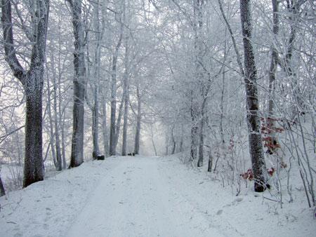 Schnee bey Kytlice