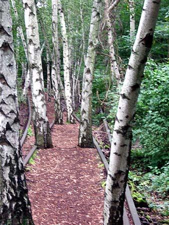 Schöneberger Südgelände: Birken auf dem Gleis