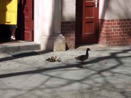 Ente vor dem Haus