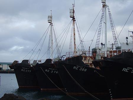 Island: Walfänger