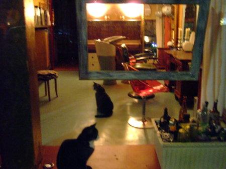 Nachtkatzen beim Frisör